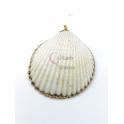 Pendente Concha Branco Mesclado - Rebordo Dourado (35mm)