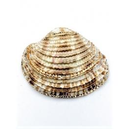 Pendente Concha Aneis - Rebordo Dourado (28x35mm)